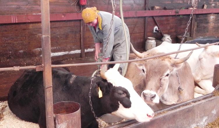 Омских аграриев поздравили сДнем рабочего сельского хозяйства